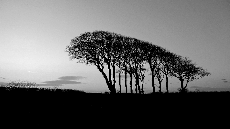 2013jan13devontrees2bw